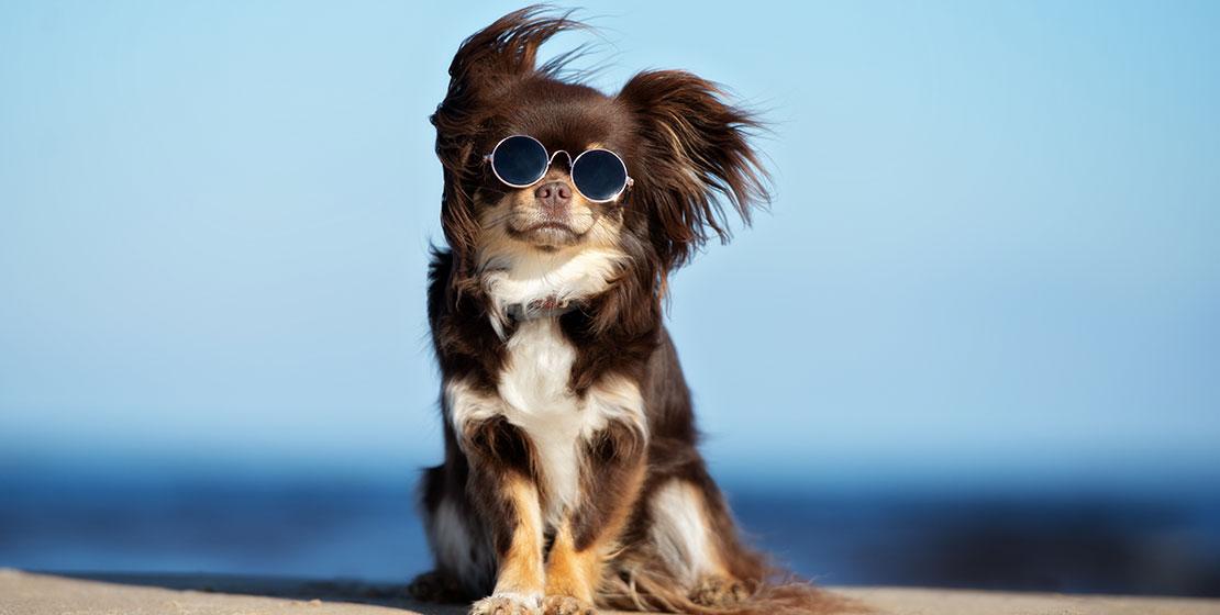August FIRST FRIDAY : Dog Daze of Summer
